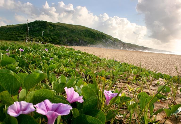 Restinga praial protegida